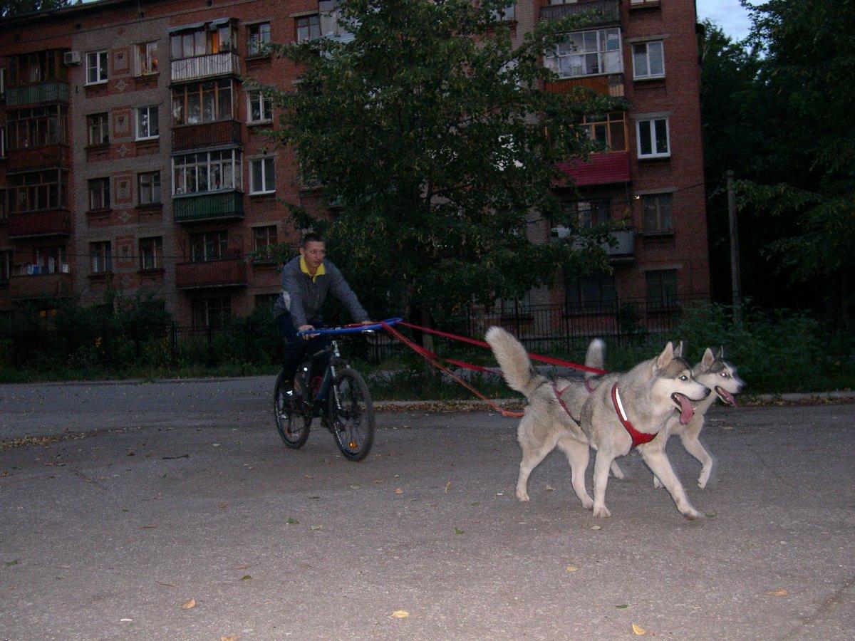 http://velosamara.ru/images/article/sobaka-i-velosiped/Rich_Bayra_Bikejoring.jpg